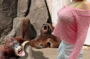 サルも巨乳が好きだよね!