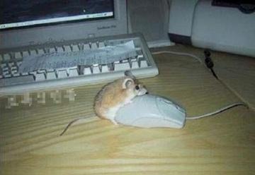 マウス?マウス!